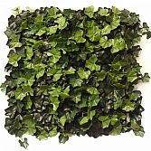 IVY DELUXE 50CM X 50CM – ARTIFICIAL HEDGE PANEL